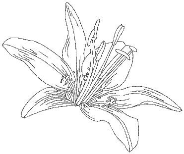Day Lily from Pen & Ink Flowers. Perfect for combining ...