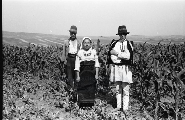 B59.Cernauti.Bukowiner Bauern im Feld, stehend.24. Juli 1941.Fotograf Willy Pragher