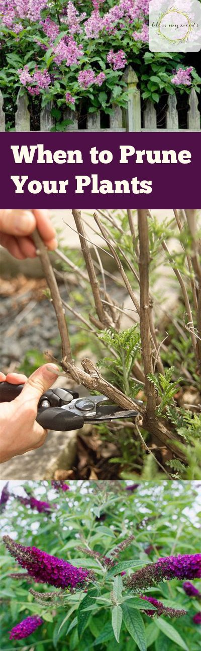 When to Prune Your Plants - Bless My Weeds