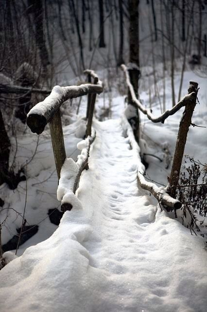 Walking through the woods on a wintery evening . . .