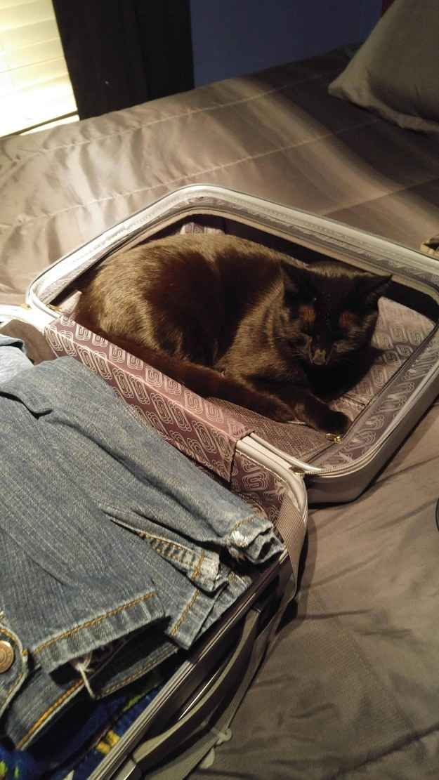 Your packed suitcase. There can be no better place to sit.