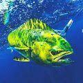 Australian Online Fishing & tackle Store Shimano Reel Reels Lure Lures Rod Rods Fish AusFish AusFishwarehouse #ShimanoReel