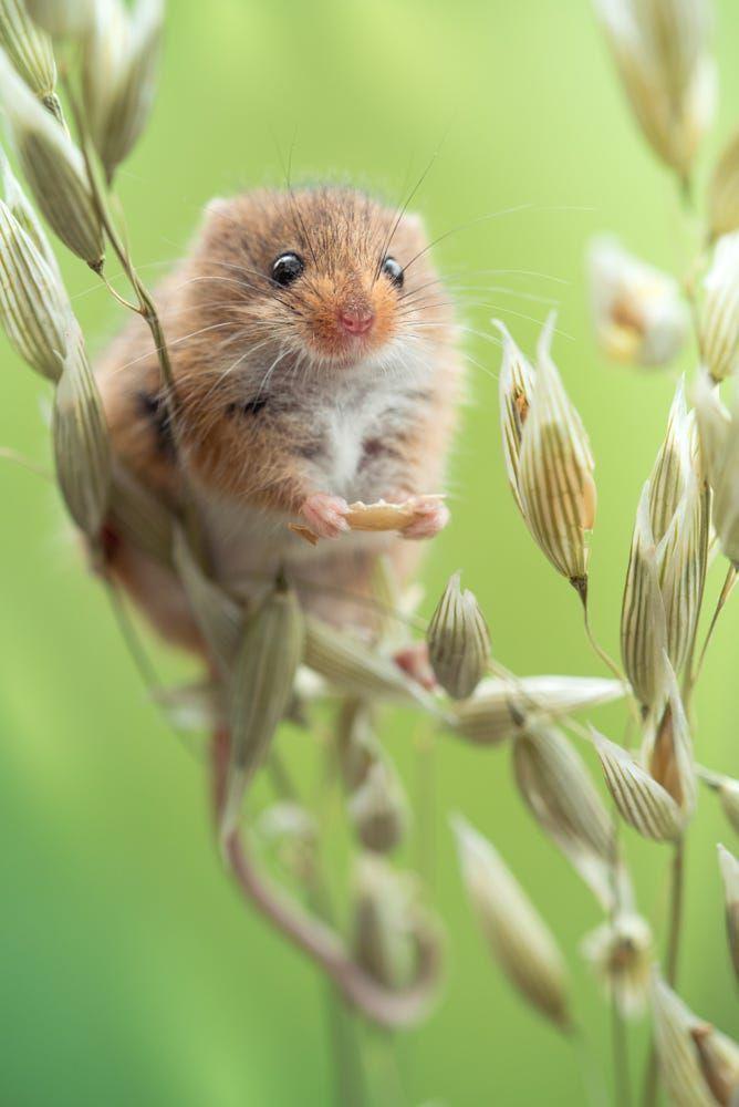 25 Spectacular Animals That Start With The Letter D Schattige Dieren Dieren En Dier Fotografie