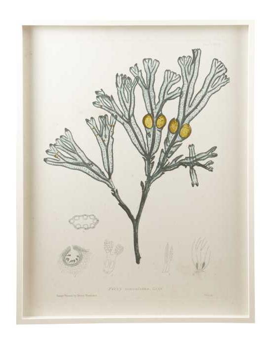 Freedom Luminous Seaweed Print