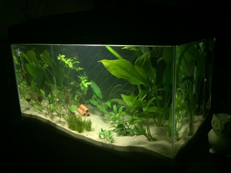 62 best images about fish tank on pinterest aquarium for Ammonia in fish tank