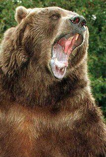 Bart the Bear - IMDb