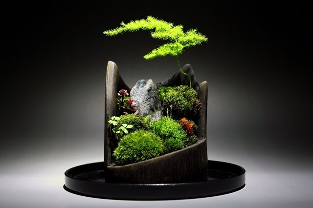 Moss Bonsai Garden, gorgeous!