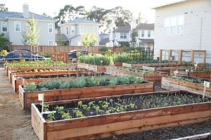 eco garden tips (from green & clean mom blog)