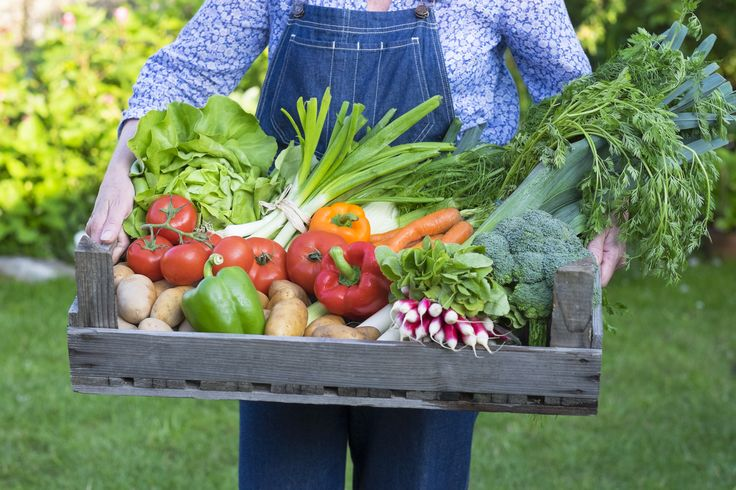 Once you've got the veg-growing bug, you'll itch to grow more and more. You want the superb flavours and just-picked, no-chemicals freshness of home-grown for everything, from your breakfast fruit to your kids' tea, all year round. This is the online vegetbale growing course that shows you how to do...
