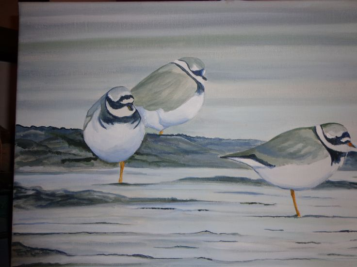 Little Ringed Plover in the lagoon acrylic on canvas, ago 2013