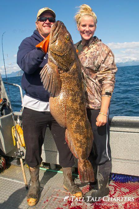 Homer Alaska Fishing Trips: Gulf of Alaska lingcod caught on lightweight tackle.   © AlaskaFishingTrips.biz