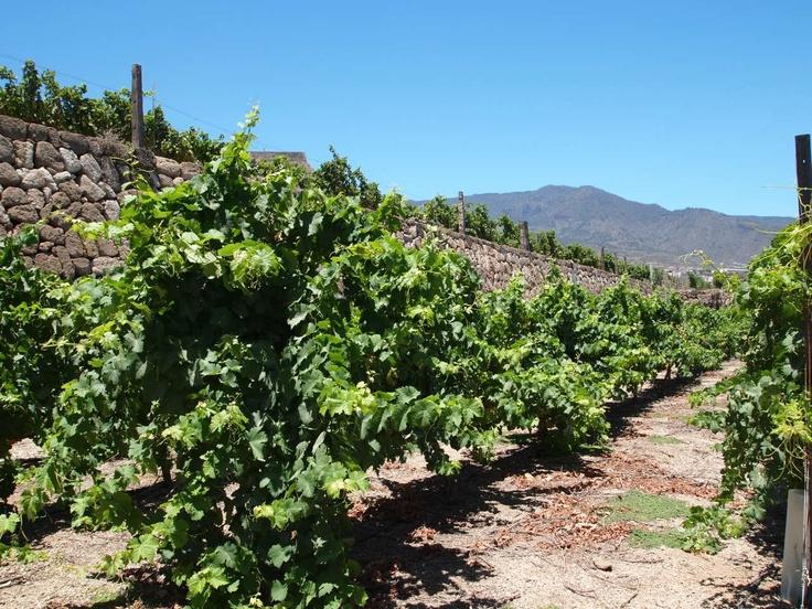 Viñedo #Contiempo #Enoturismo #Viticultura