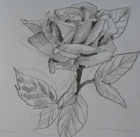 17 Best ideas about Easy To Draw Rose on Pinterest | How ...  17 Best ideas a...