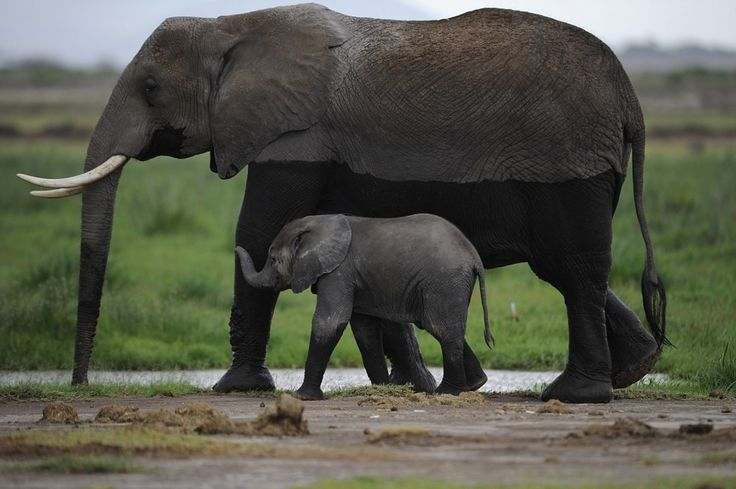 World Elephant Day seeks to raise awareness about the endangered species - The Washington Post