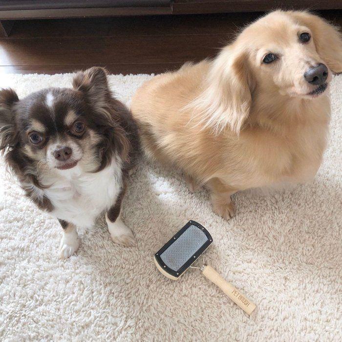 3coins ペットスクエアブラシ その実力は 飼い主さん体験レポ いぬのきもちweb Magazine ペット いぬ 犬