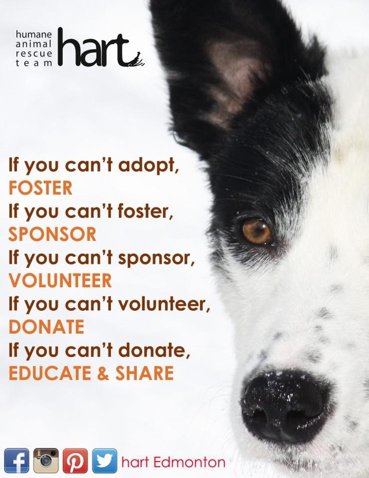 hart - Humane Animal Rescue Team http://www.humaneanimalrescueteam.ca