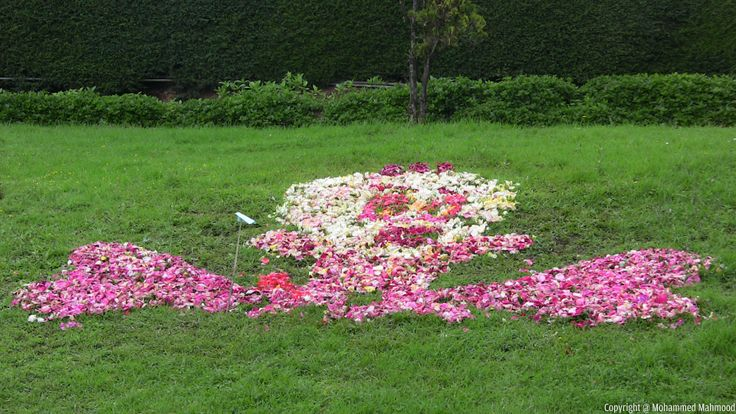 Design pattern created using patels of the roses at Rose Garden, Ooty