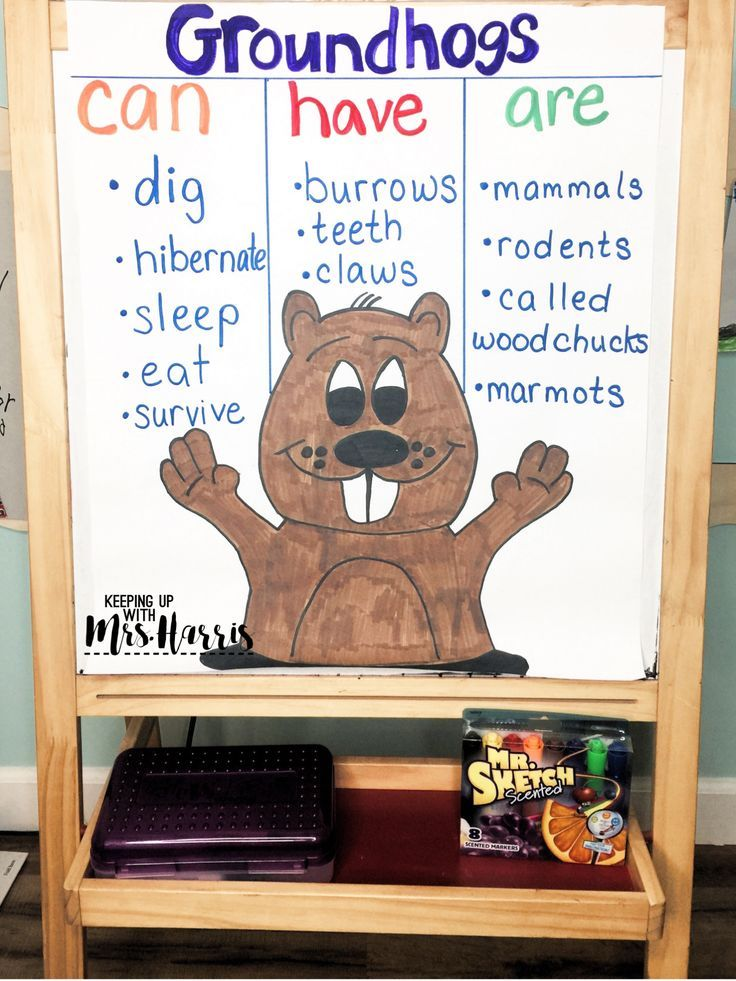 Groundhog Day Anchor Chart - Groundhog Facts