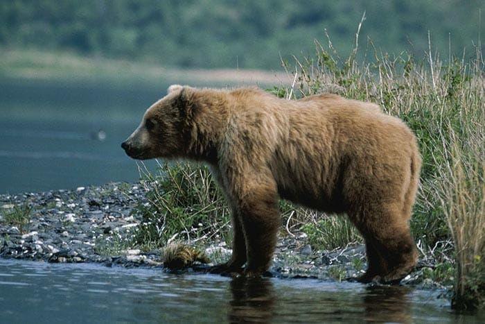 Alaska Bear Camp