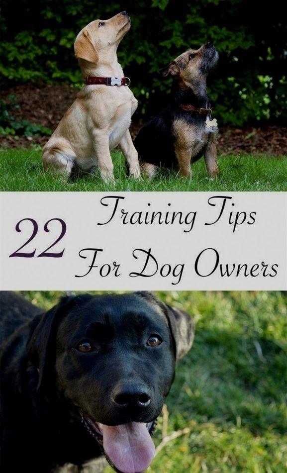 Dog Training Bite Suit Dog Training Oakland Dog Training 47130