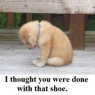I thought you were done with that shoe.: Bad Boys, Animals, Dogs, Pin, Pets, Funny, Puppy