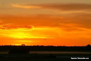 Aamun koi elokuussa  Dawn in August