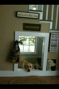 House Dog Indoor_n.jpg (236×354)