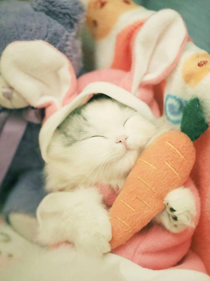 Картинки котик с зайкой с добрым утром
