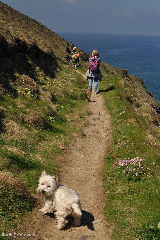 Path to Cligga Point near Perranporth, Cornwall