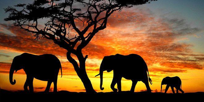 Éléphants et coucher de soleil