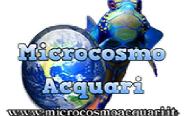 Microcosmo Acquari: Acquariofilia e acquariologia Uno dei più grandi portali di acquariofilia in Italia con forum di discussione tra i più frequentati per l'allestimento di acquari di acqua dolce e marini. Consigli per l'allevamento in acquario di p