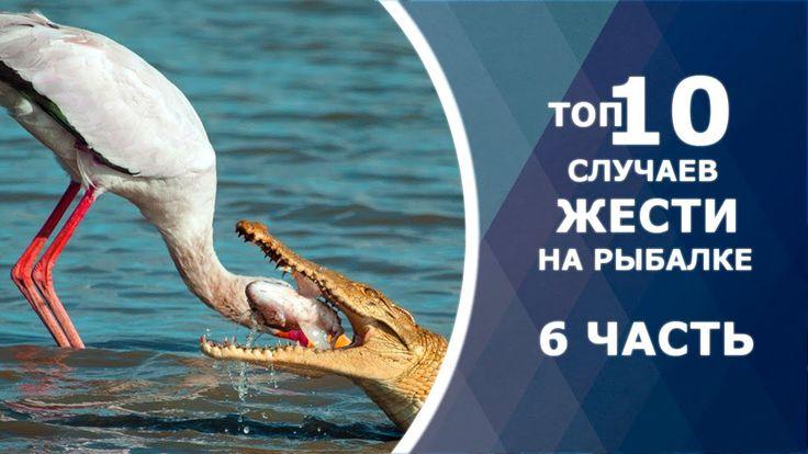 ТОП 10 случаев жести на рыбалке. Опасные моменты