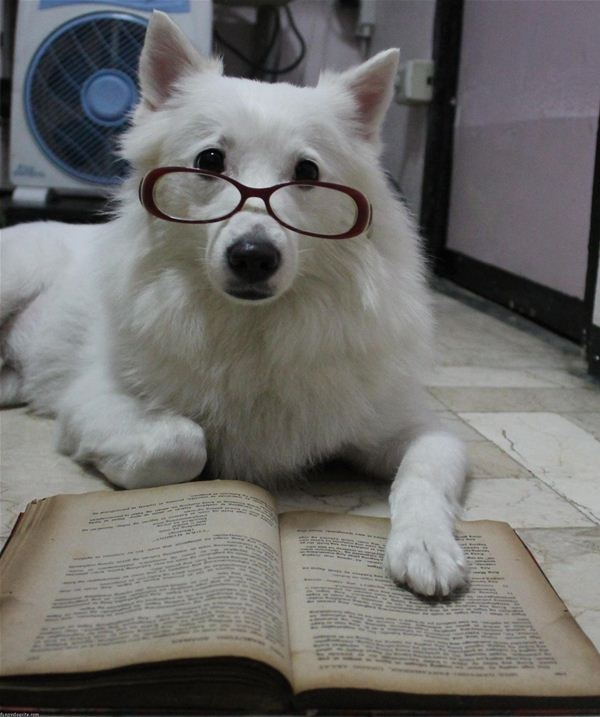 29 Best Animals Reading Images On Pinterest Reading
