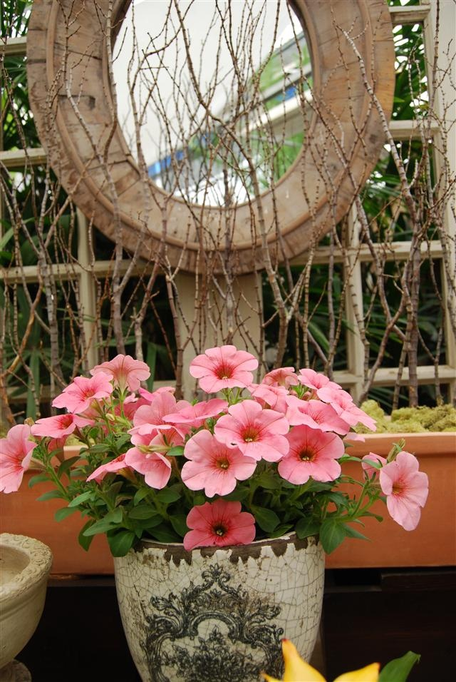 Best Hanging Basket Flowers For Hummingbirds : Best images about ruby throated hummingbirds on