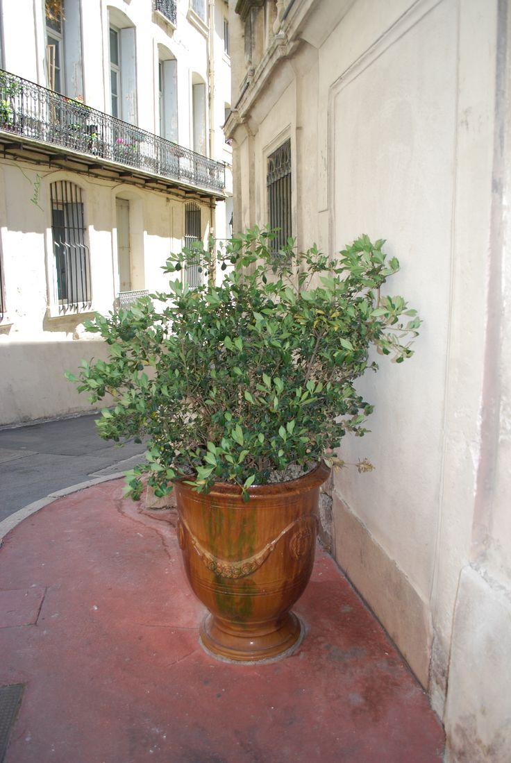 Les ruelles de Montpellier Locations d'appartements Appart Selection Monptellier 04 99 53 87 36