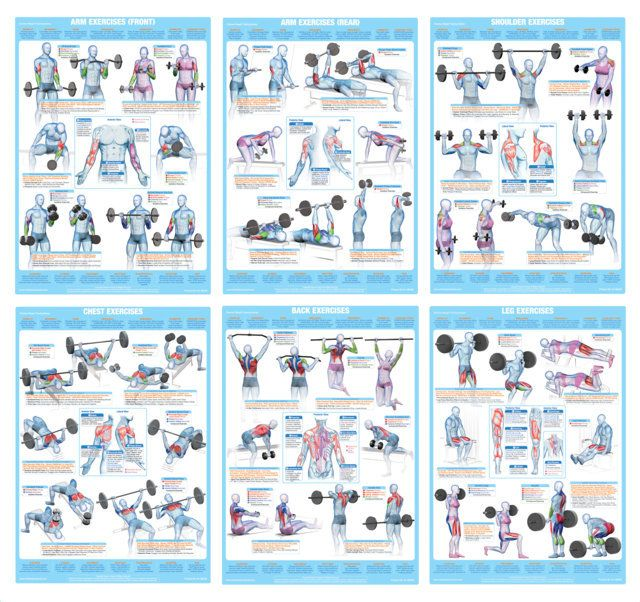 Pin By Chartex Ltd On Fitness Exercise Charts Posters