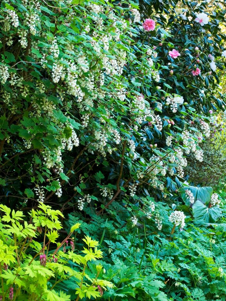 Shrubs for Areas With High Shade | Landscaping Ideas and Hardscape Design | HGTV