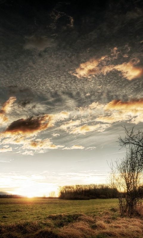 Download Wallpaper 480x800 Clouds, Sky, Field, Grass, Tree, Sun HTC, Samsung Galaxy S2/2, Ace 480x800 HD Background