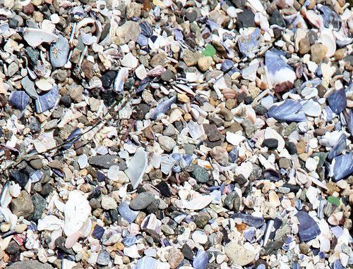 40 best plantas novas images on pinterest plants green for Crushed oyster shells for landscaping