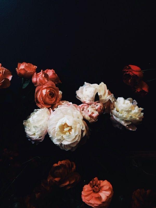 fleur clair obscur