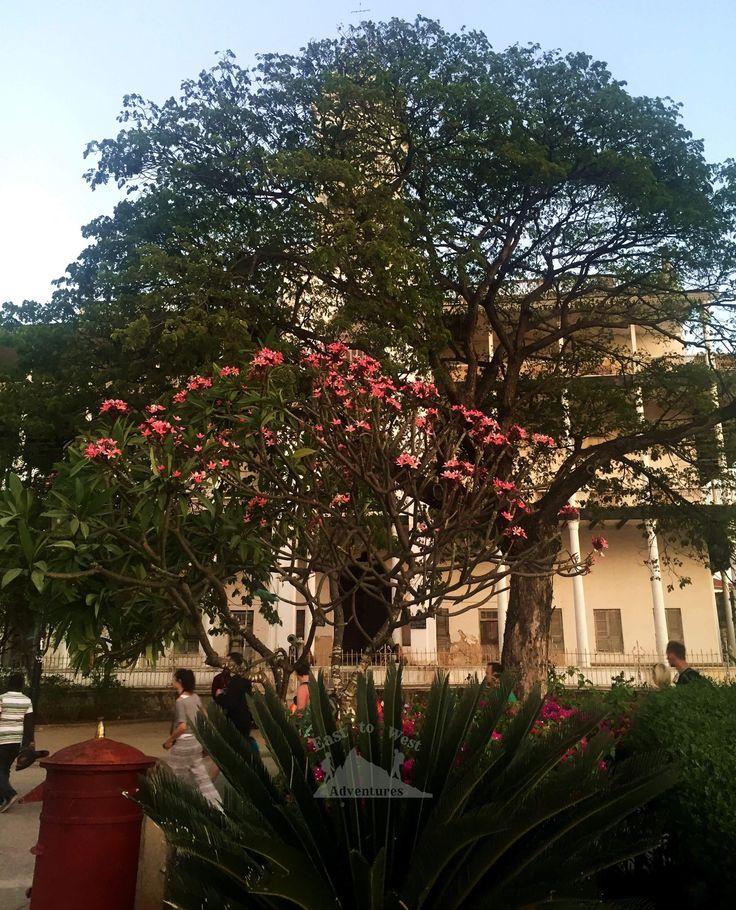 House of wonders 🏠بيت العجائب  #houseofwonders #zanzibar #stonetown #adventure #sightseeing #tanzania #holidayfactory #dubaitraveller #uaebloggers #instatravel #travelforlife #travel4life #travel4arab #blogger #explore #exploreafrica #africa #tropical #vacationtime #instapassport #instaexplore