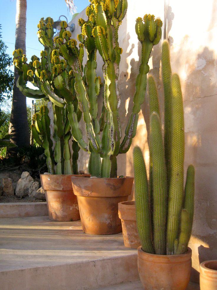 Ibiza  ☮ www.purehouseibiza.com loves Cactus ☮