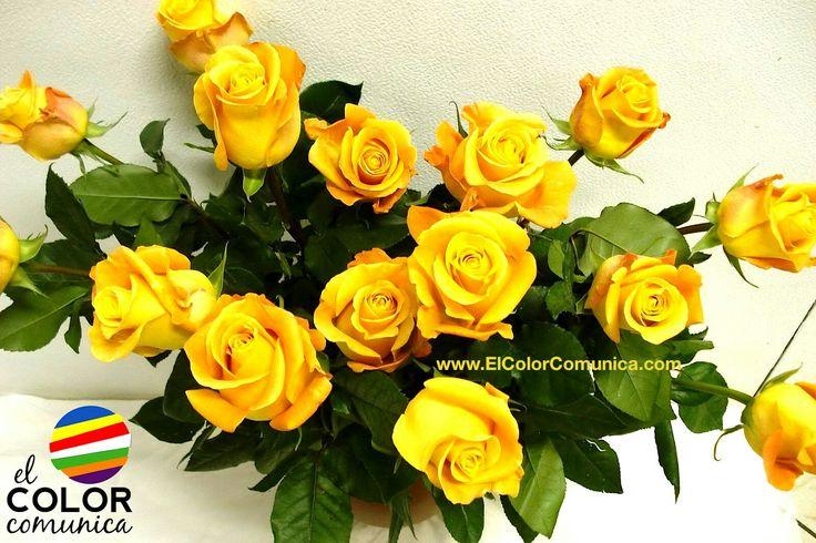 Rosas amarillas http://www.elcolorcomunica.com/2013/04/significado-de-las-rosas-amarillas.html?m=1