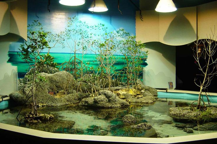 Aquarium Decoration Design Ideas ~ http://www.lookmyhomes.com/creative-aquarium-decoration-ideas/