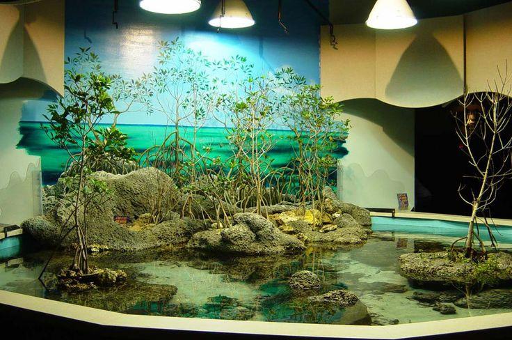 Aquarium Decoration Design Ideas ~ http://www.lookmyhomes.com/creative-aquarium-decoration-ideas/
