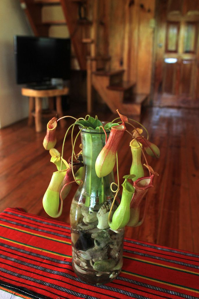 255 best images about carnivorous plant terrariums on pinterest glass apothecary jars string. Black Bedroom Furniture Sets. Home Design Ideas
