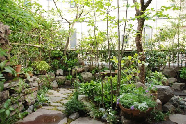 1000 images about ld japanese garden on pinterest for Plants found in japanese gardens
