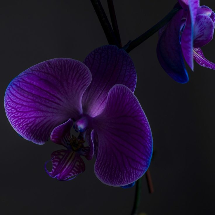 Photograph Orchid on Black by Alex Ganuza on 500px