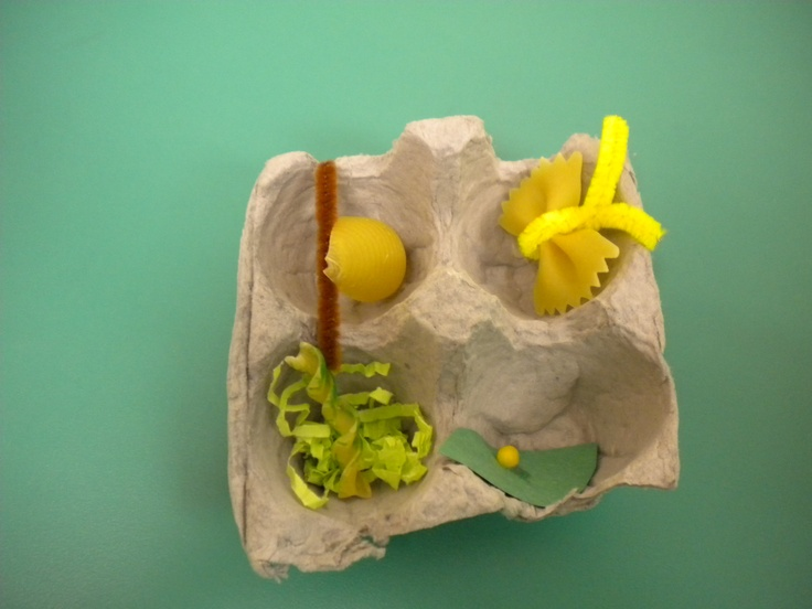 Life Cycle of a Butterfly.  Made with pasta.  The egg on the leaf is a popcorn kernel. Spiral pasta for the caterpillar, shell pasta for the chrysalis, and butterfly pasta for the butterfly.  All inside a partial egg carton.