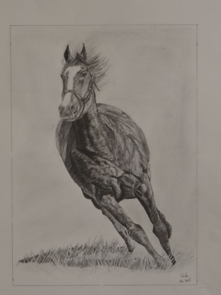 cheval - crayon